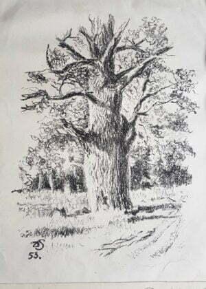 Donald Solo - Dębowa polana, ołówek, papier,1953 r.