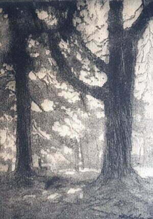 Donald Solo - Kasztany, ołówek, papier, 1957 cm.
