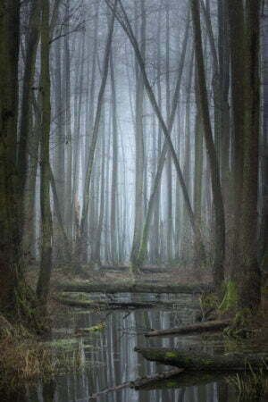 julian łoziński fotografia przyrody