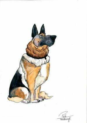 azalia pies adopcja płońsk